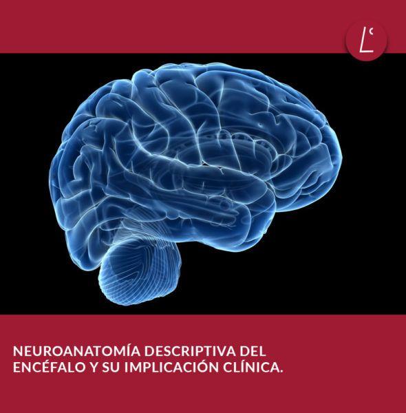 centro-lescer-cursos-neuroanatomia-encefalo-madrid-juan-carlos-bonito-gadella-instagram
